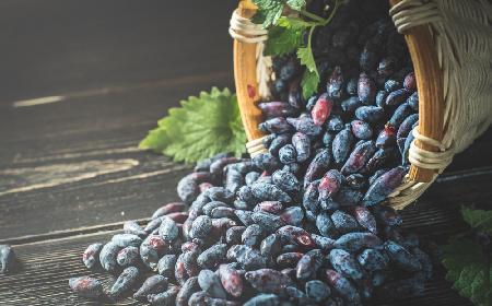 Dżem z jagody kamczackiej: przepis na domowe przetwory